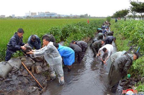 Somente em 2020, ao menos 4 tufões arrasaram áreas agrícolas da Coreia Popular. Crédito: KCNA.
