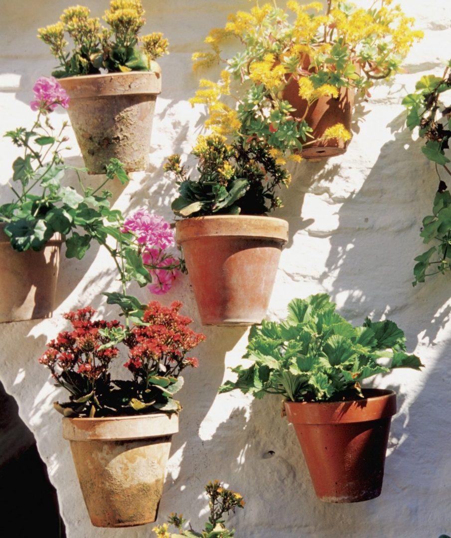 plantas sombra