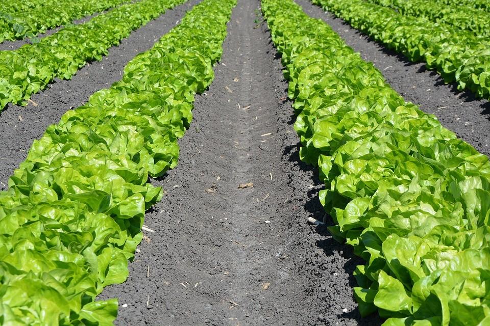 Federação Portuguesa de Agricultura Biológica