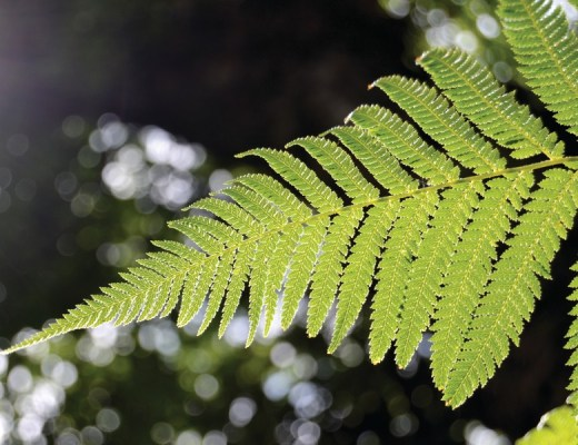 fascínio pelas plantas