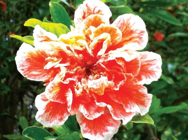arbustos floridos