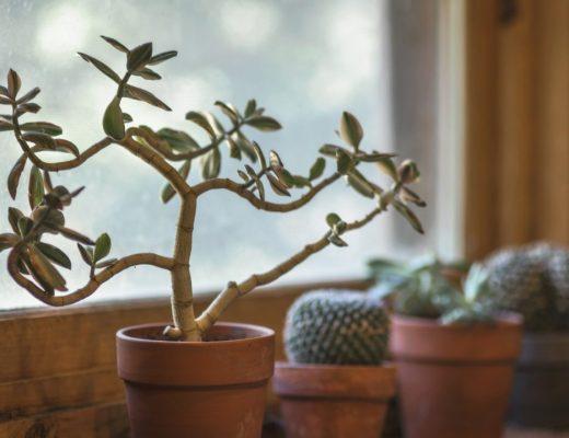 plantas em vaso