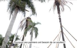 Hilda Caicedo, Notas sobre el desplazamiento de palmeras