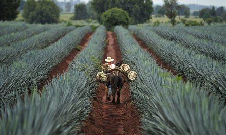 Los productos con denominación de origen de México – Quiz