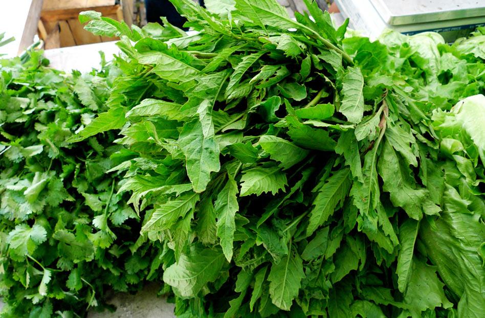 El Epazote – Herbario