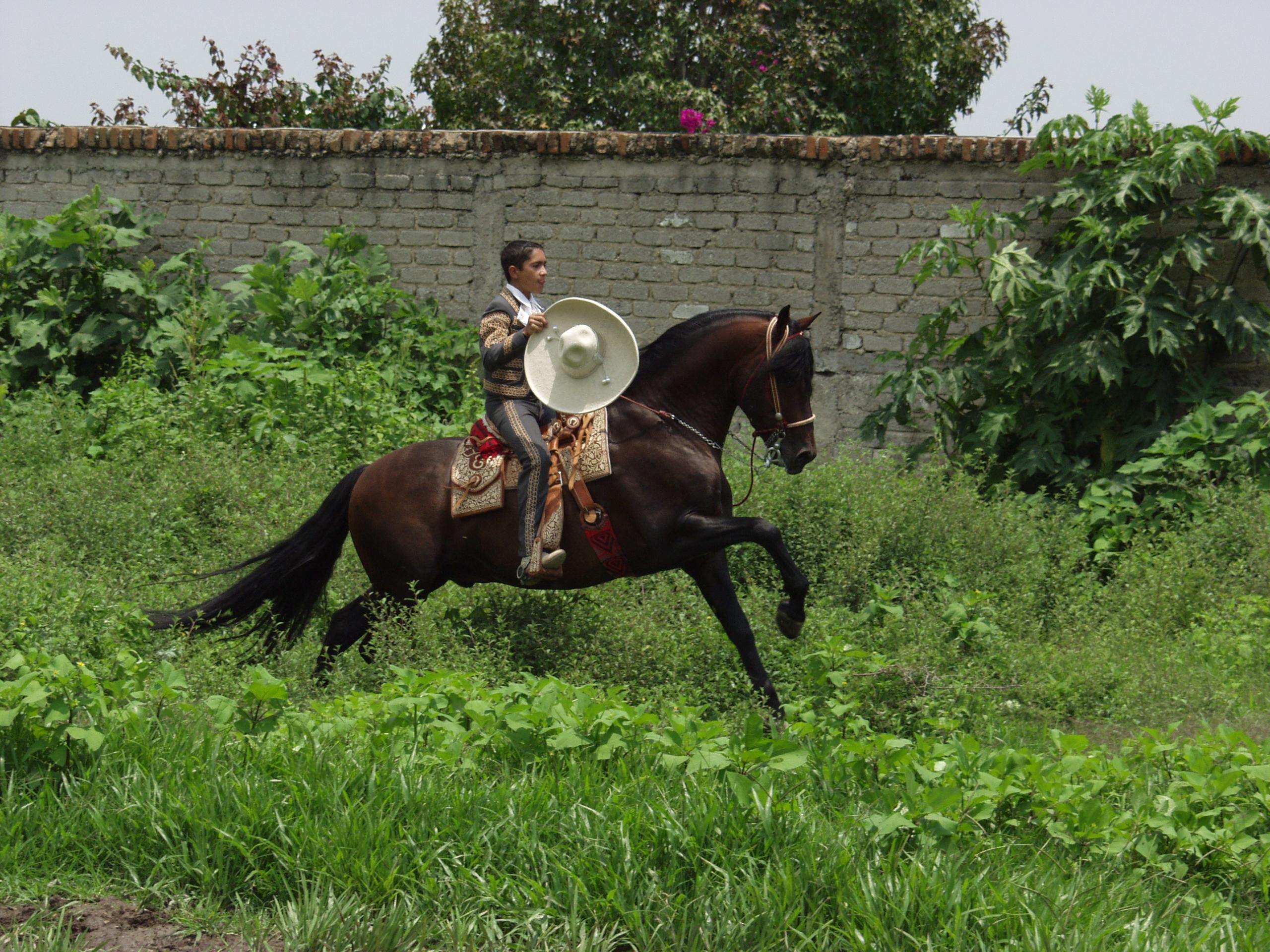 caballos pura sangre  Mundo Equino