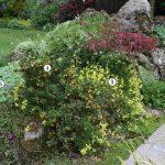 Um Tipico Cottage Garden Revista Natureza