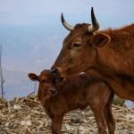 Nacimiento en el campo ©
