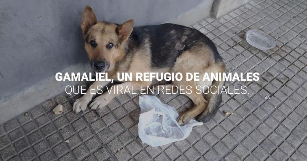 Gamaliel, un refugio para animales que es viral en las redes sociales.