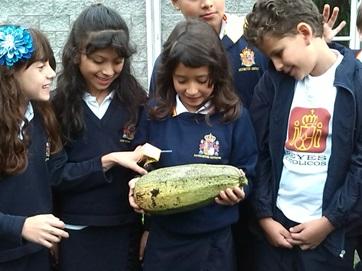 El alumnado recoge los primeros frutos.