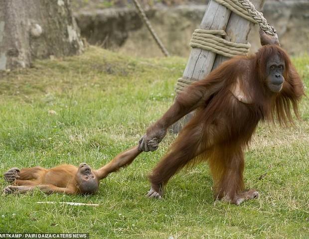 Fotógrafo registra birra de macaco após mãe interromper brincadeira