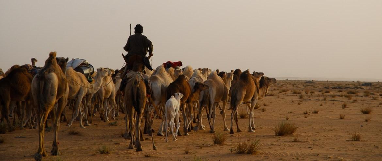 Cáfila - Mauritânia