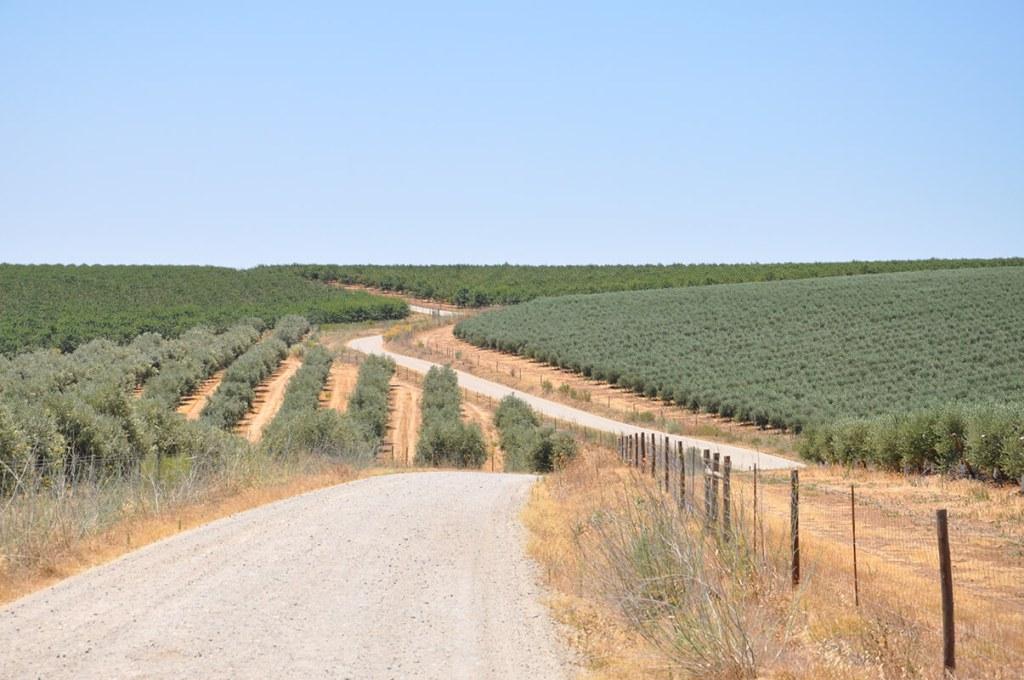 Entre vinhas e olivais