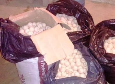 4 mil huevos de tortuga