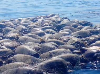 300 tortugas muertas en Oaxaca