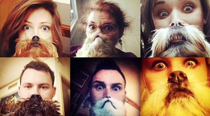 Los mejores Perros y Gatos Barba de la red.