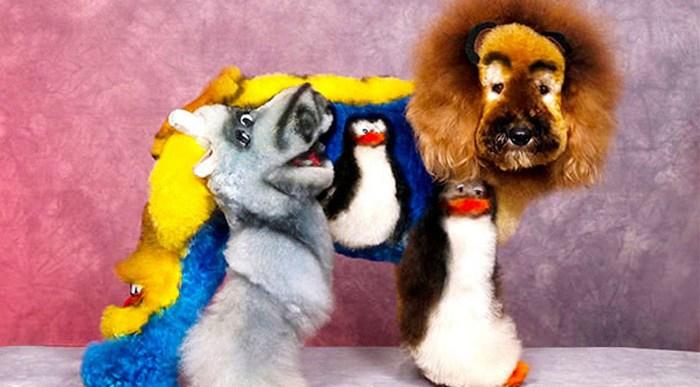 ¿Qué opinas? Amor por los animales o frivolidad.