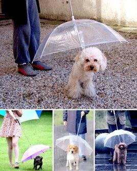Invento - Paragüas con correa para perros
