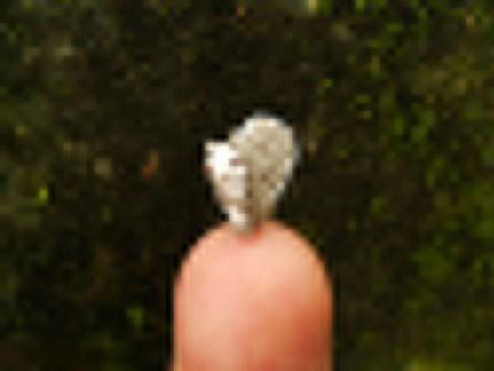 Amigurumi miniaturas - Ardillita