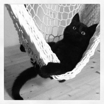 Gatito negro de relax