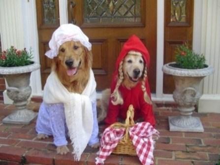 Disfraces para Mascotas en Halloween - Disfraz de Caperucita Roja y su Abuela