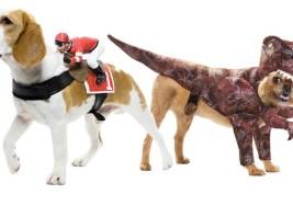 ¿Tienes Mascota? 35 Disfraces para Mascotas en Halloween.