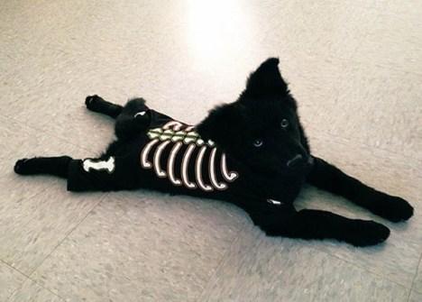 Disfraces para Mascotas en Halloween - Disfraz de Esqueleto