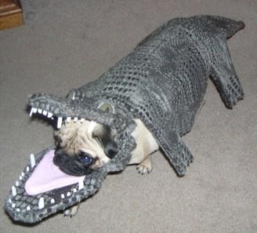 Disfraces para Mascotas en Halloween - Disfraz de Cocodrilo para perros