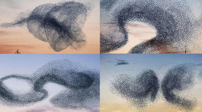 Murmuration… El Fenómeno de las Aves Migratorias.