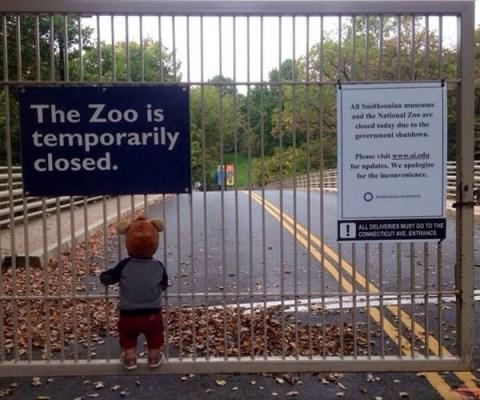Las Imágenes más Sobrecogedoras de 2013 - Desesperanza de un niño en el Zoo de Washington temporalmente cerrado.