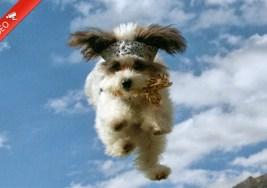 Perritos Voladores VS Gatitos Voladores.