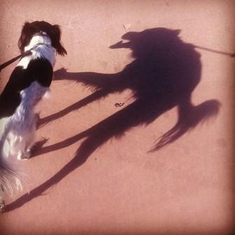 Sombras Divertidas que no Imaginarías.