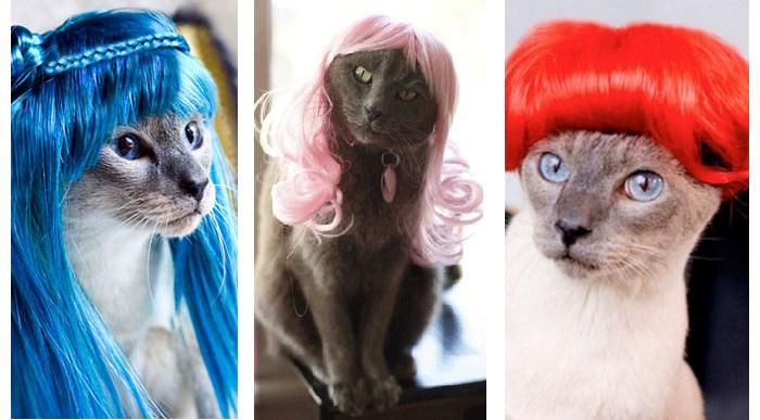 16 Gatos con Peluca que te harán Reír.