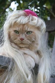 Gatos con Peluca que te harán Reír