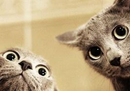 ¿Sabías que hay Gatos que se sacan Selfies?