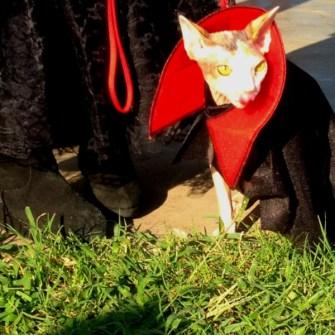 Mi-Gato-vampiro