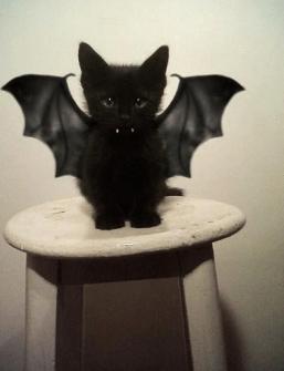 Mi-gatito-muy-metido-en-el-papel
