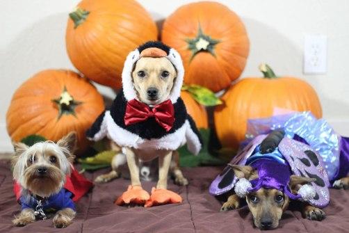 Mis-mascotas-en-Halloween