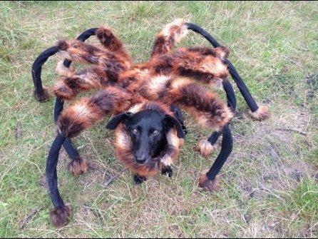 Perro-con-disfraz-de-tarantula