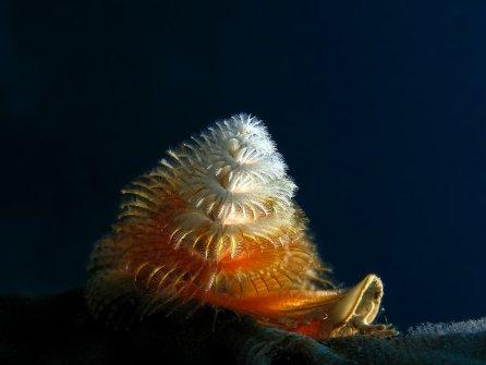 gusano-arbol-en-navidad