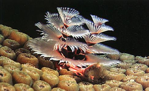 gusano-de-navidad