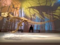 Lego Esqueleto Dinosaurio