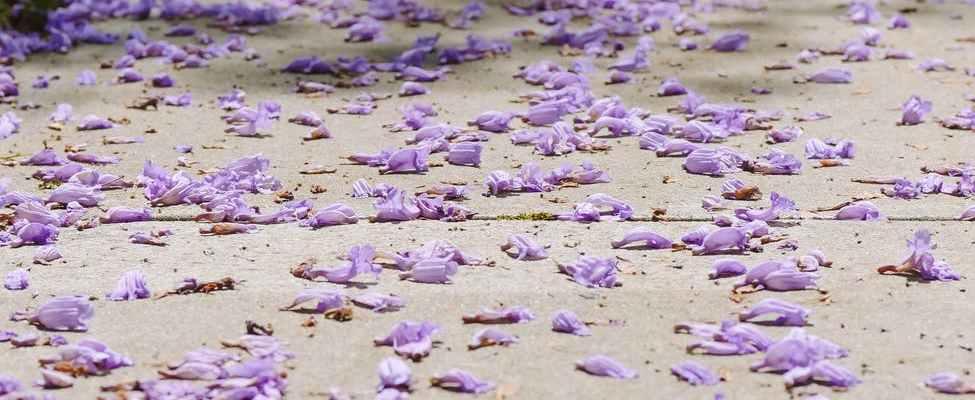 purple petals on the ground