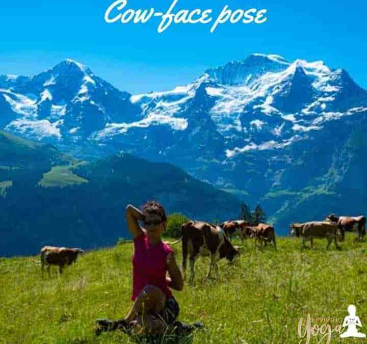 Cow-face pose
