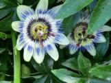 Twice the Passion