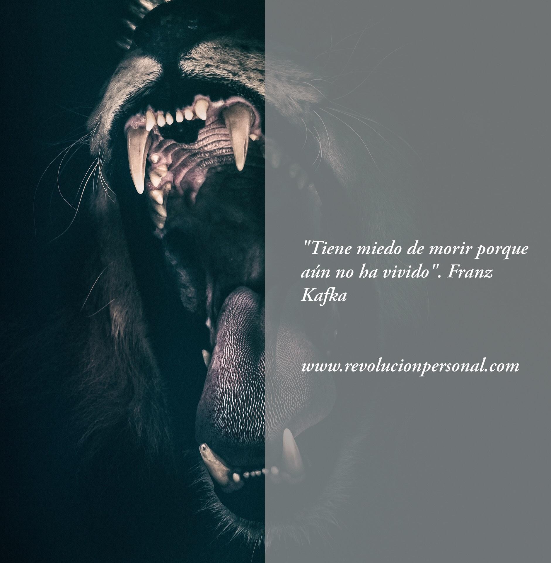 Frases para no tener miedo
