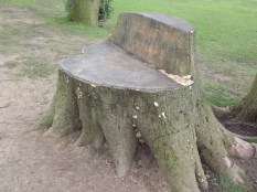 an imaginative use of a tree stump - colonised by fungi