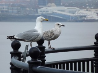 two denizens of the city with Seacombe ferry terminal in the background