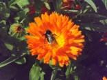 in Osterley garden