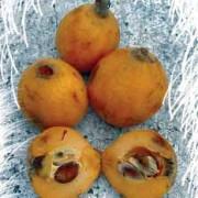 Another Fabulous Fruit: Nispero